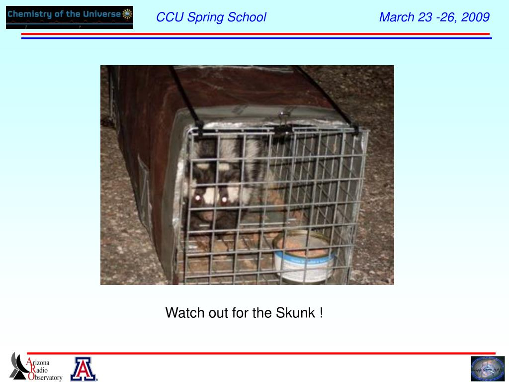 Watch out for the Skunk !