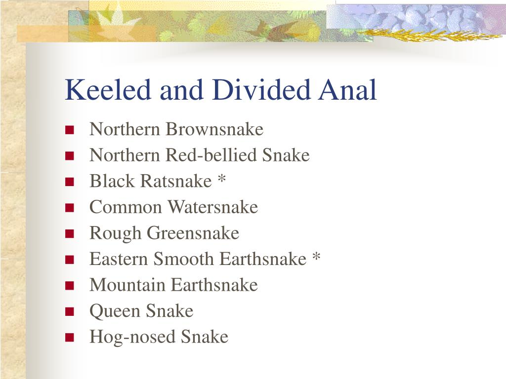 Keeled and Divided Anal