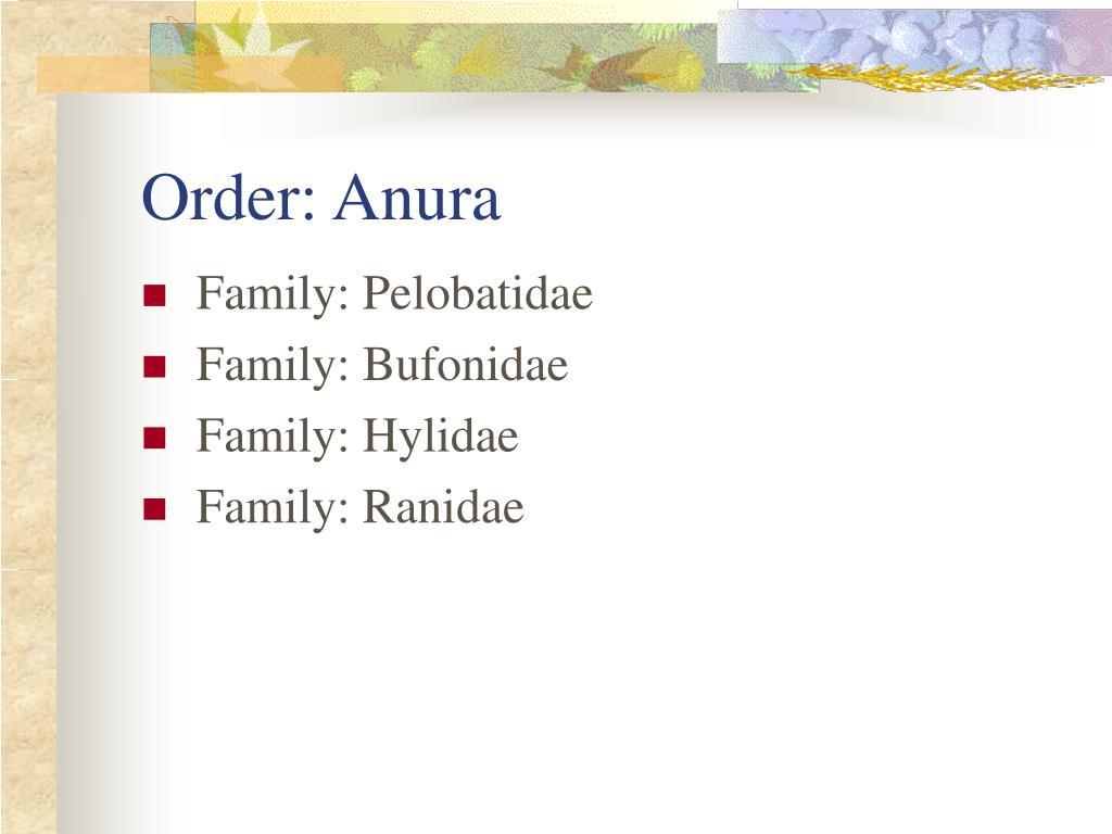 Order: Anura