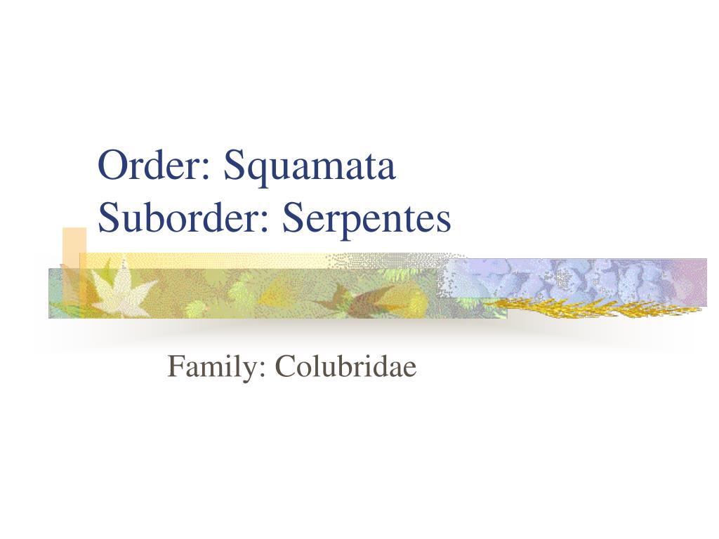 Order: Squamata