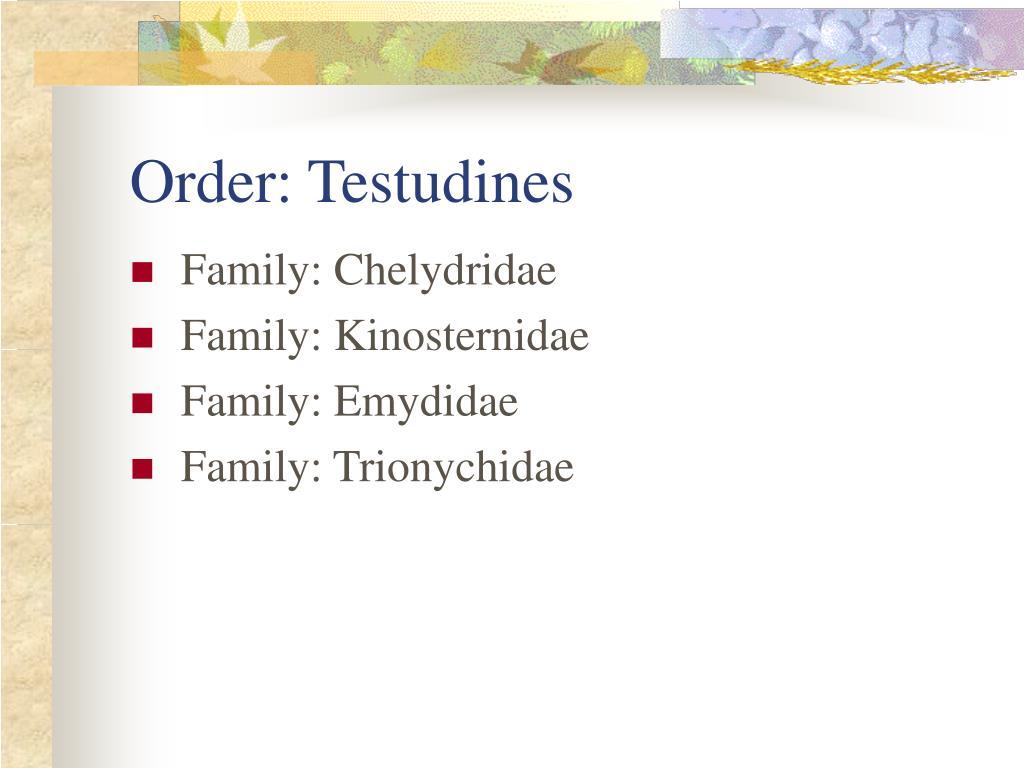 Order: Testudines