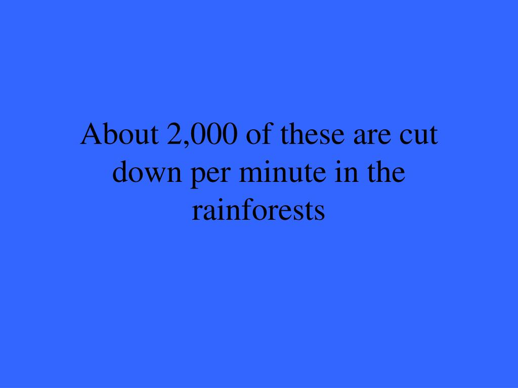 About 2,000 of these are cut down per minute in the rainforests