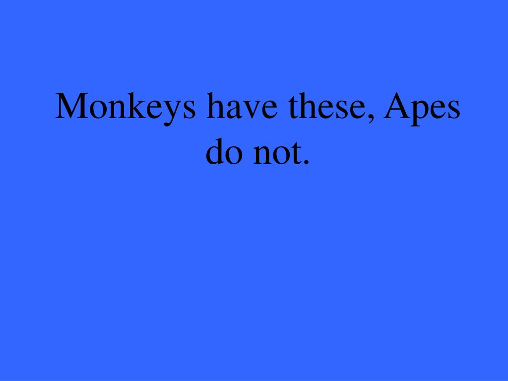 Monkeys have these, Apes do not.