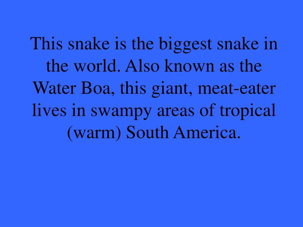This snake is the biggest snake in the world. Also known as the Water Boa, this giant, meat-eater lives in swampy areas of tropical (warm) South America.
