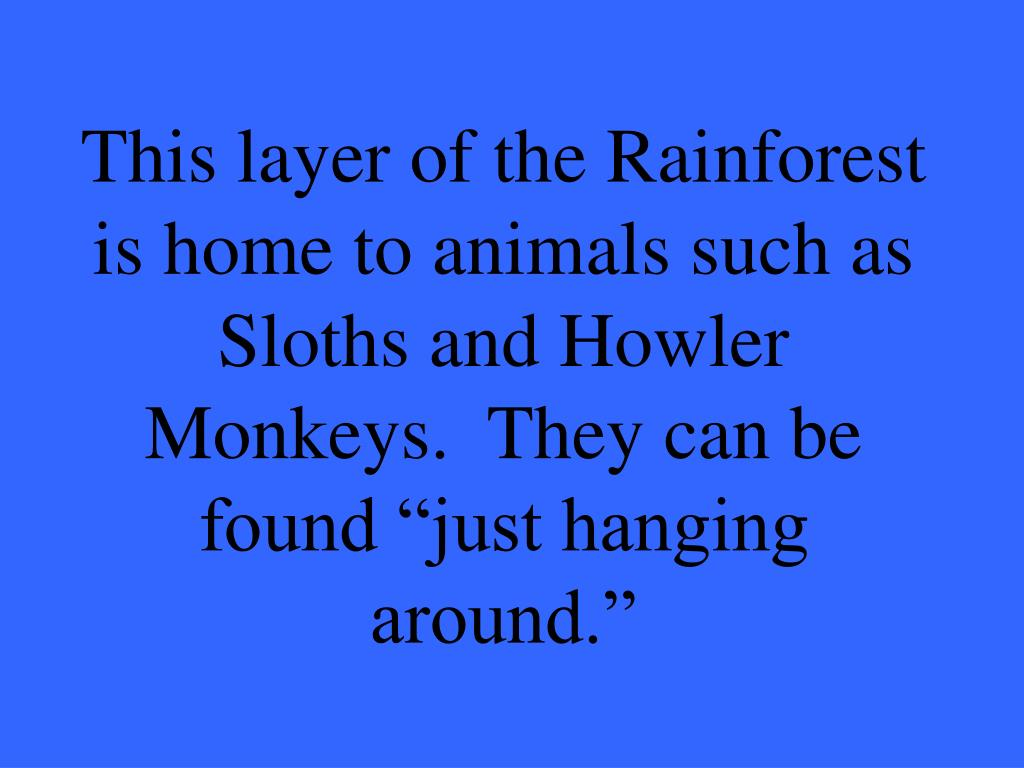 """This layer of the Rainforest is home to animals such as Sloths and Howler Monkeys.  They can be found """"just hanging around."""""""