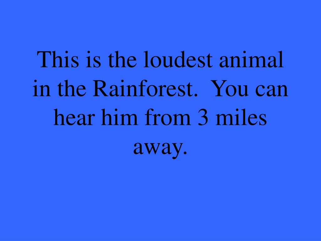 This is the loudest animal in the Rainforest.  You can hear him from 3 miles away.