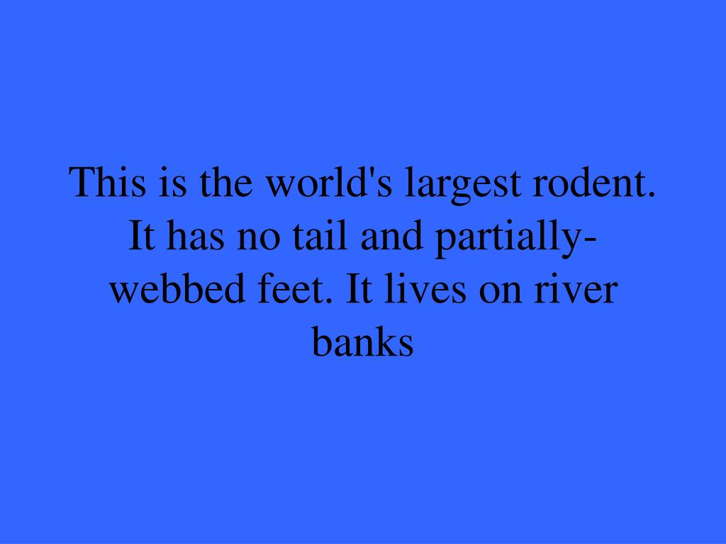 This is the world's largest rodent. It has no tail and partially-webbed feet. It lives on river banks