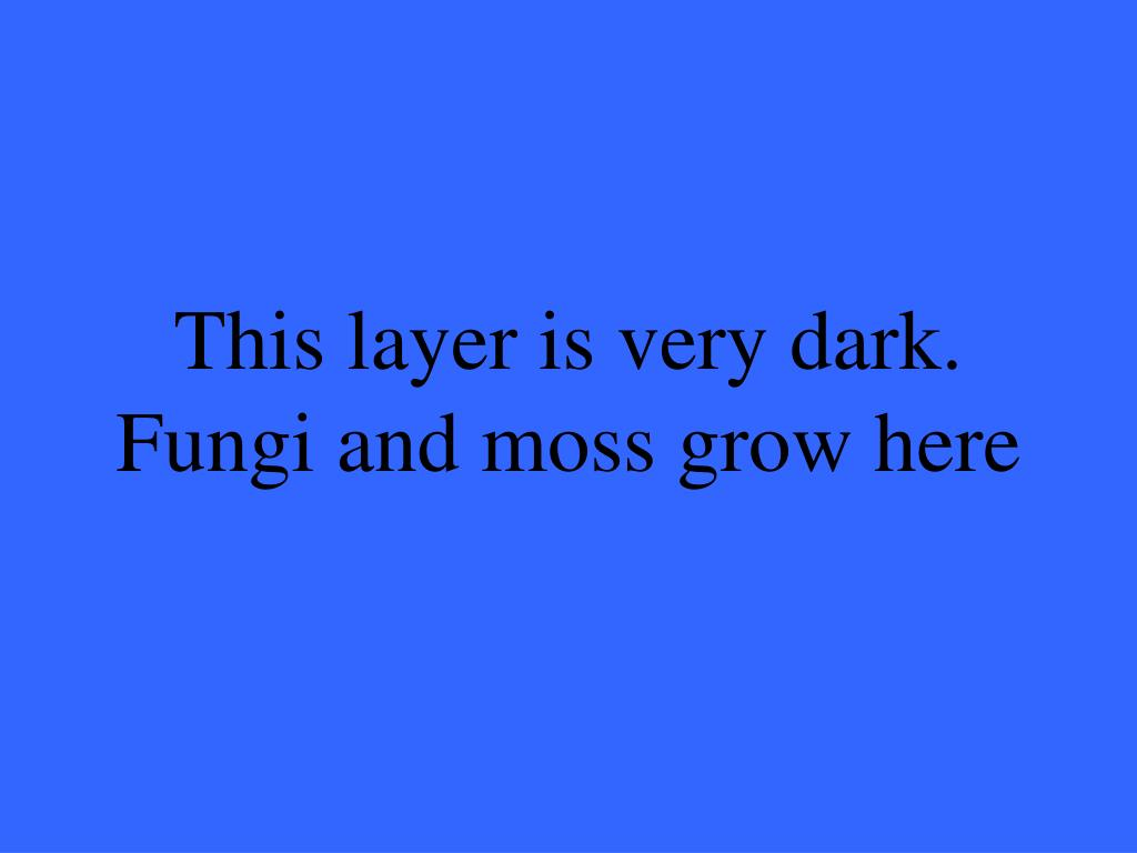 This layer is very dark.  Fungi and moss grow here