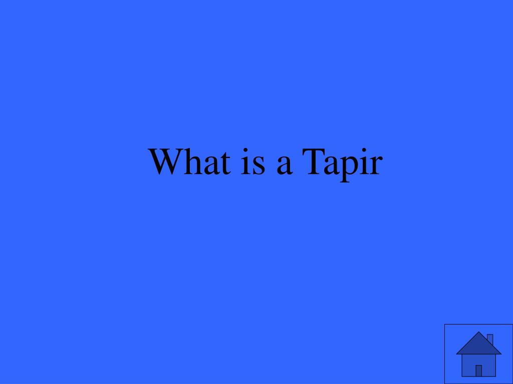 What is a Tapir