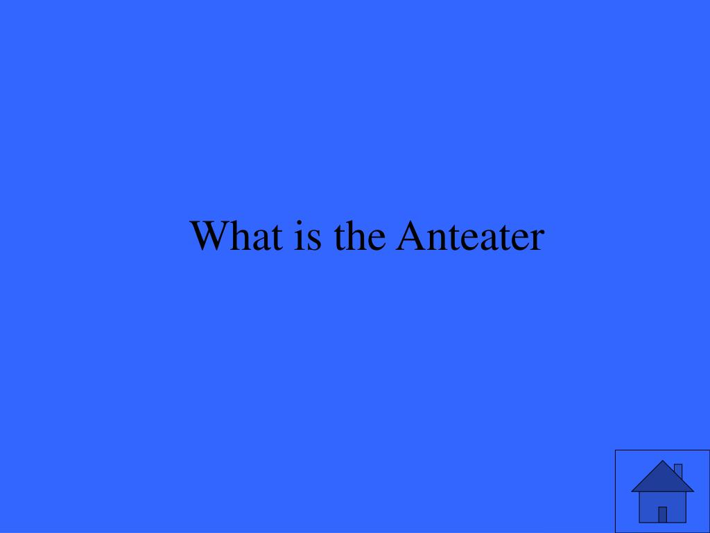 What is the Anteater