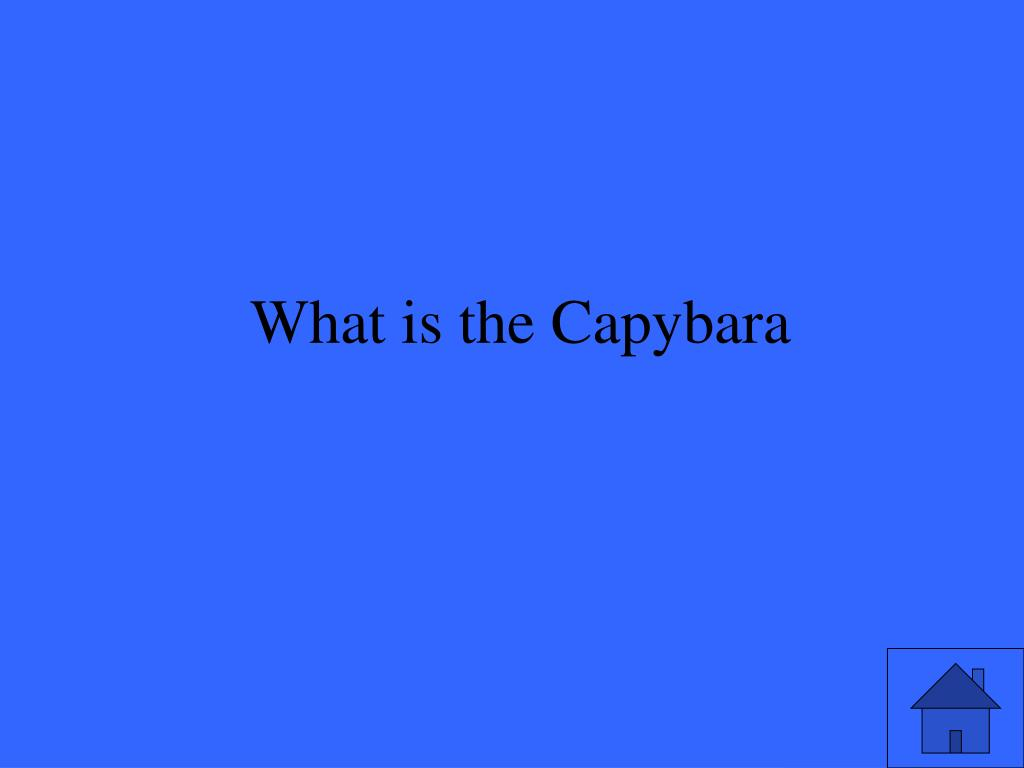 What is the Capybara