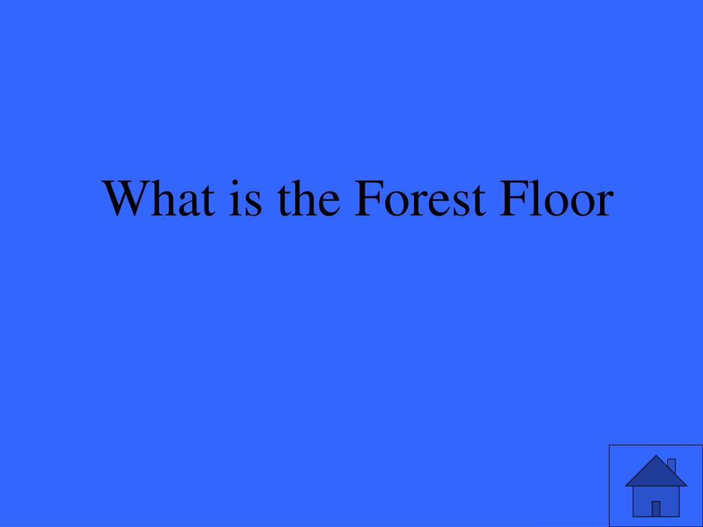 What is the Forest Floor