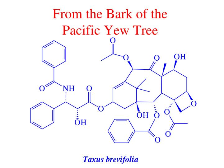 From the bark of the pacific yew tree