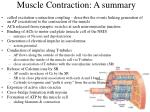 muscle contraction a summary