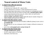 neural control of motor units
