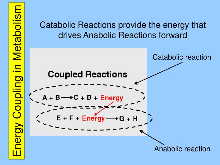 Energy coupling in metabolism