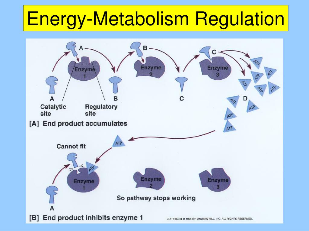 Energy-Metabolism Regulation