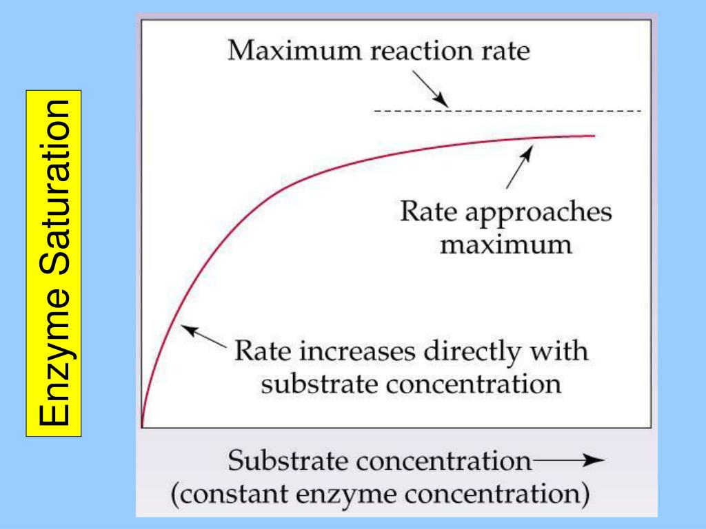 Enzyme Saturation