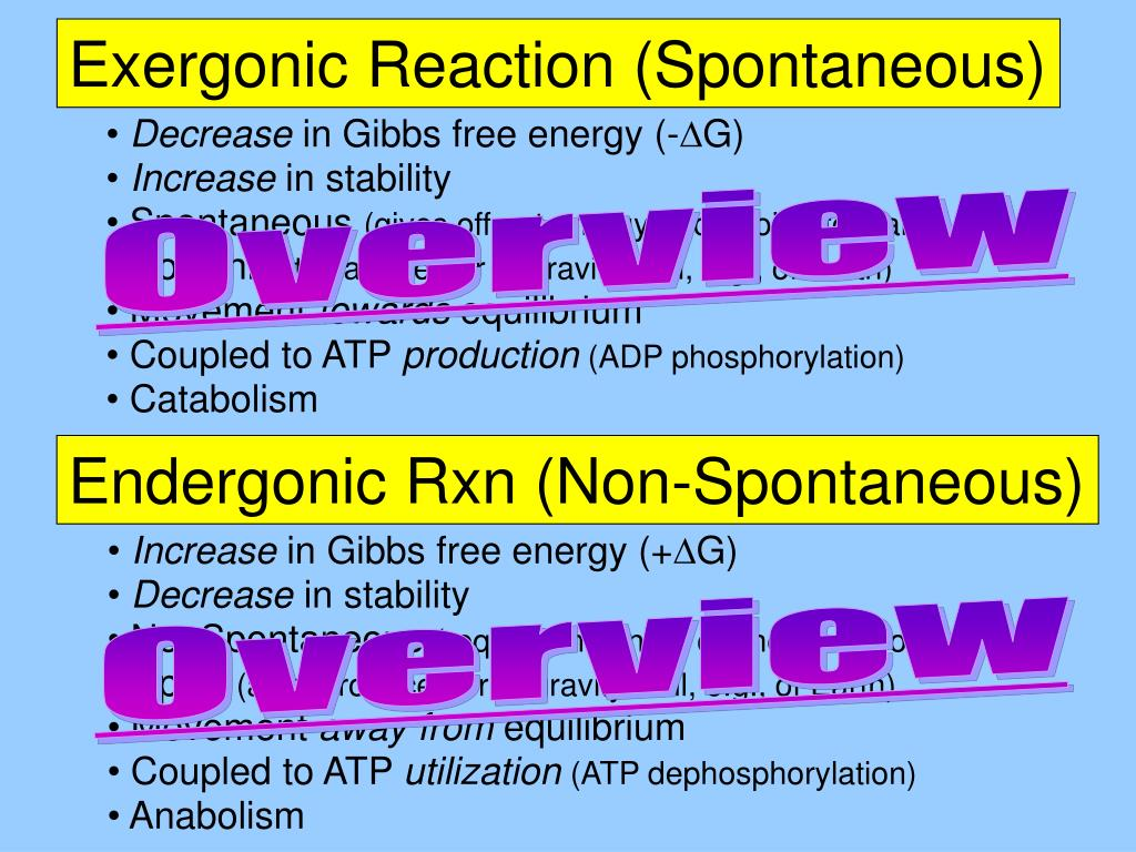Exergonic Reaction (Spontaneous)