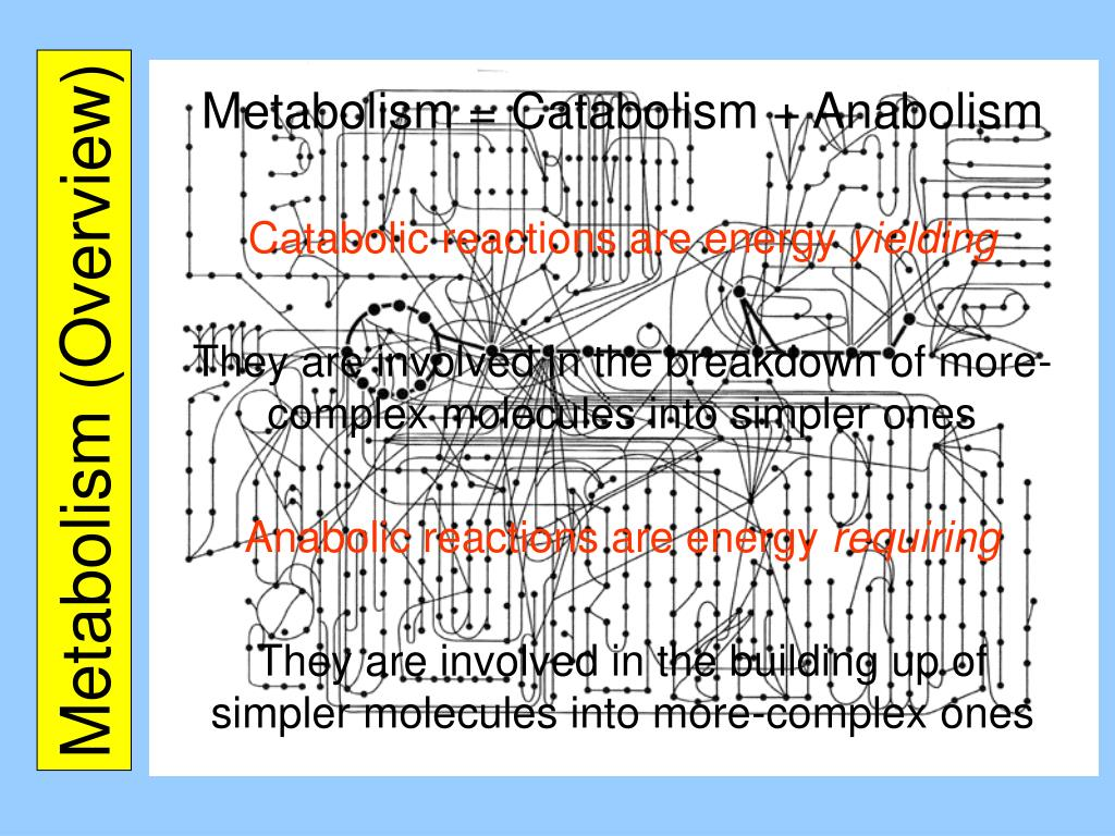 Metabolism (Overview)