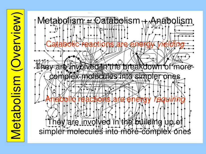 Metabolism overview