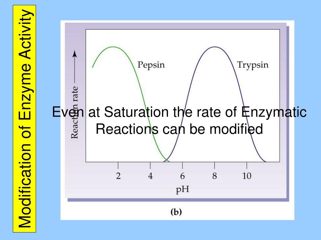 Modification of Enzyme Activity