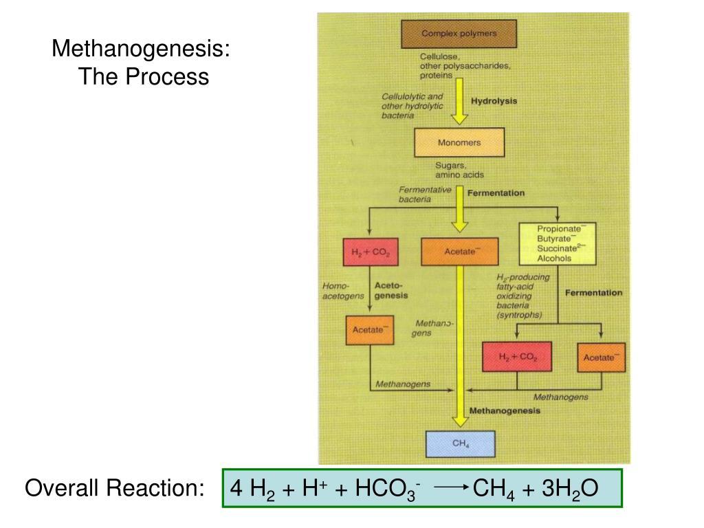 Methanogenesis: