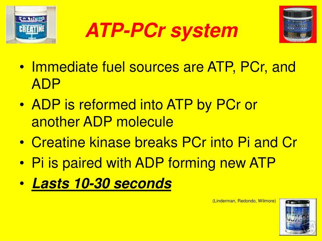 ATP-PCr system