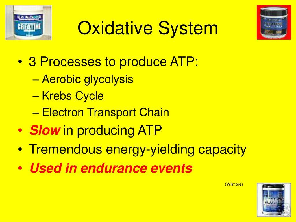 Oxidative System