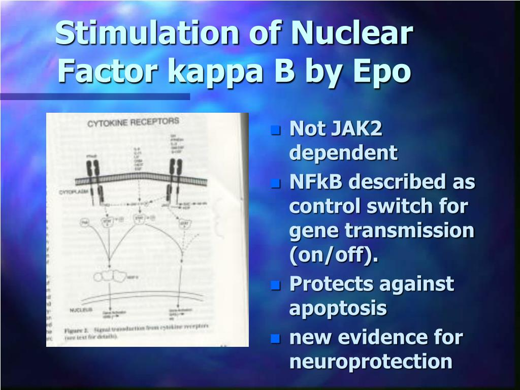 Stimulation of Nuclear Factor kappa B by Epo