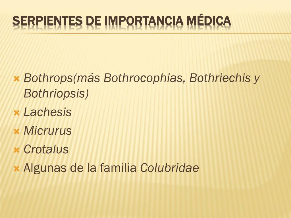 Bothrops(más Bothrocophias, Bothriechis y Bothriopsis)