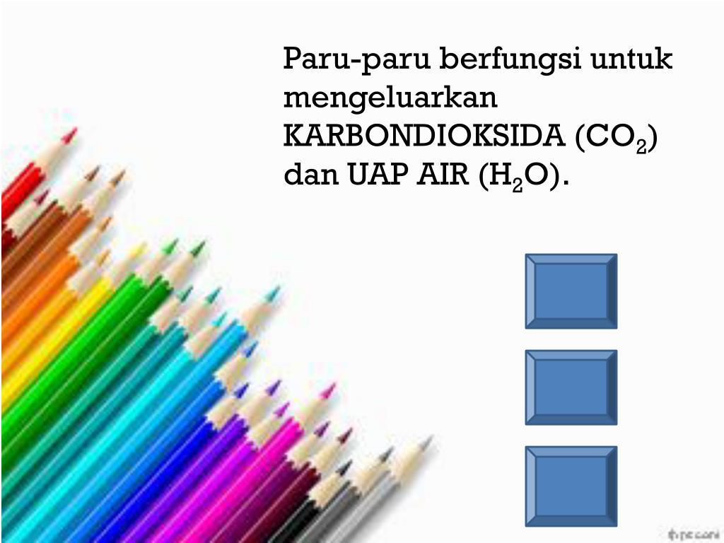 Paru-paru berfungsi untuk mengeluarkan KARBONDIOKSIDA (CO