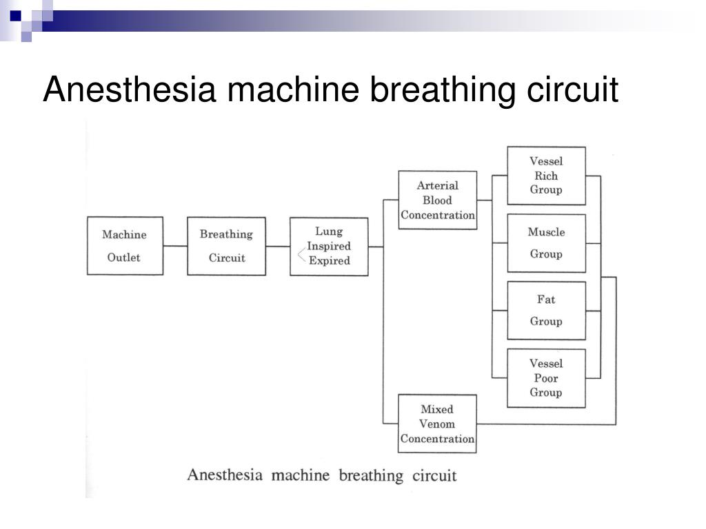 Anesthesia machine breathing circuit