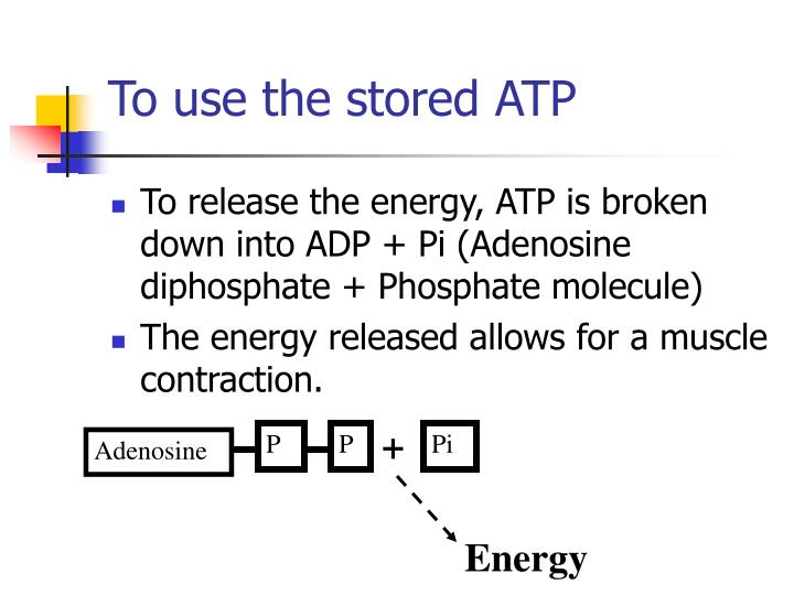 To use the stored ATP
