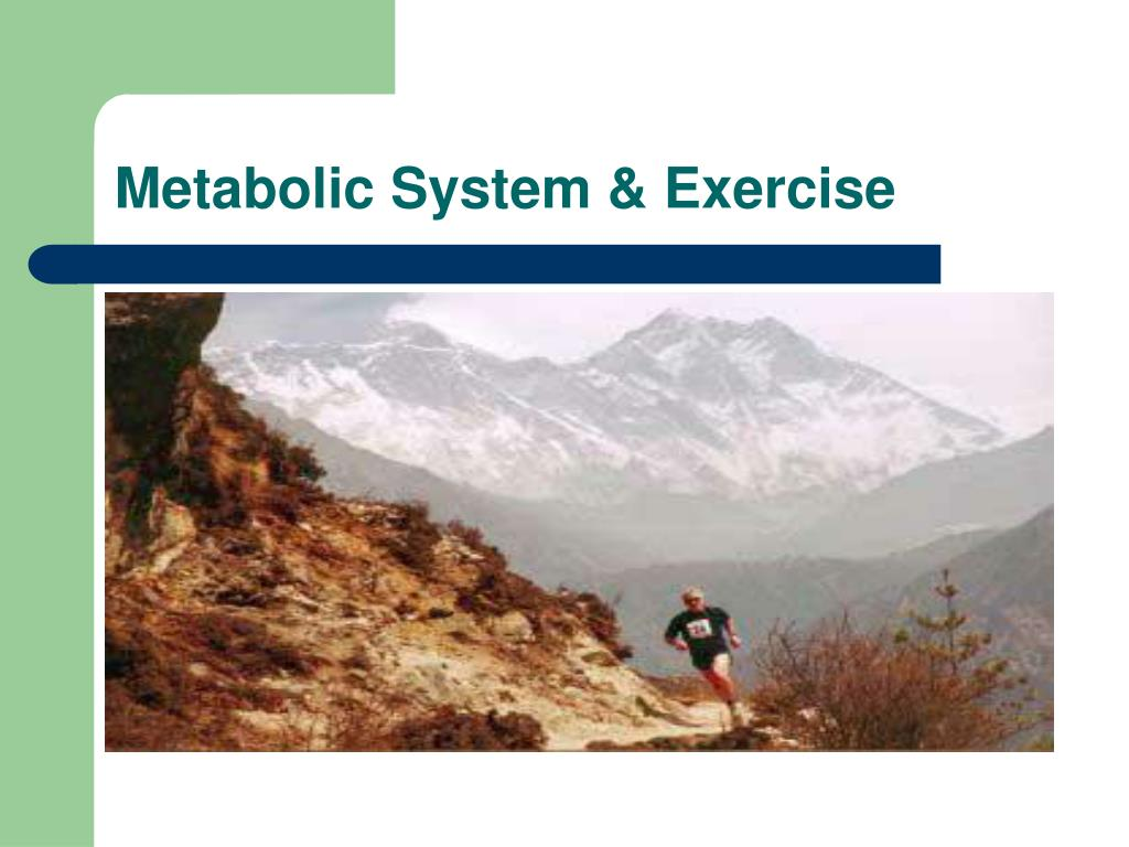 Metabolic System & Exercise