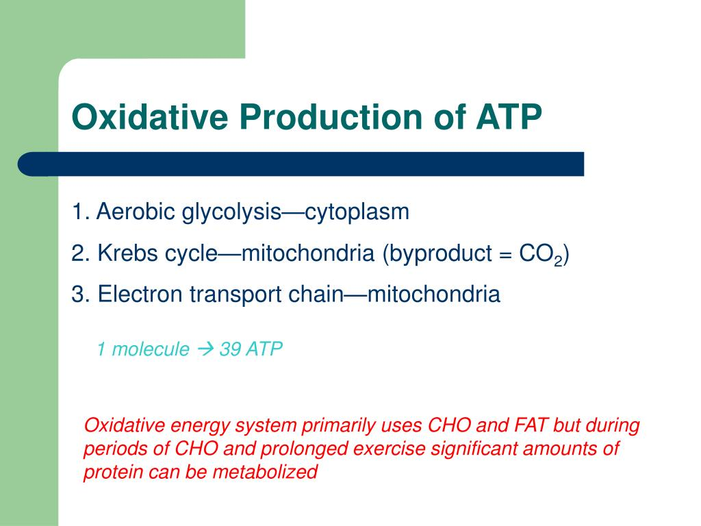 Oxidative Production of ATP