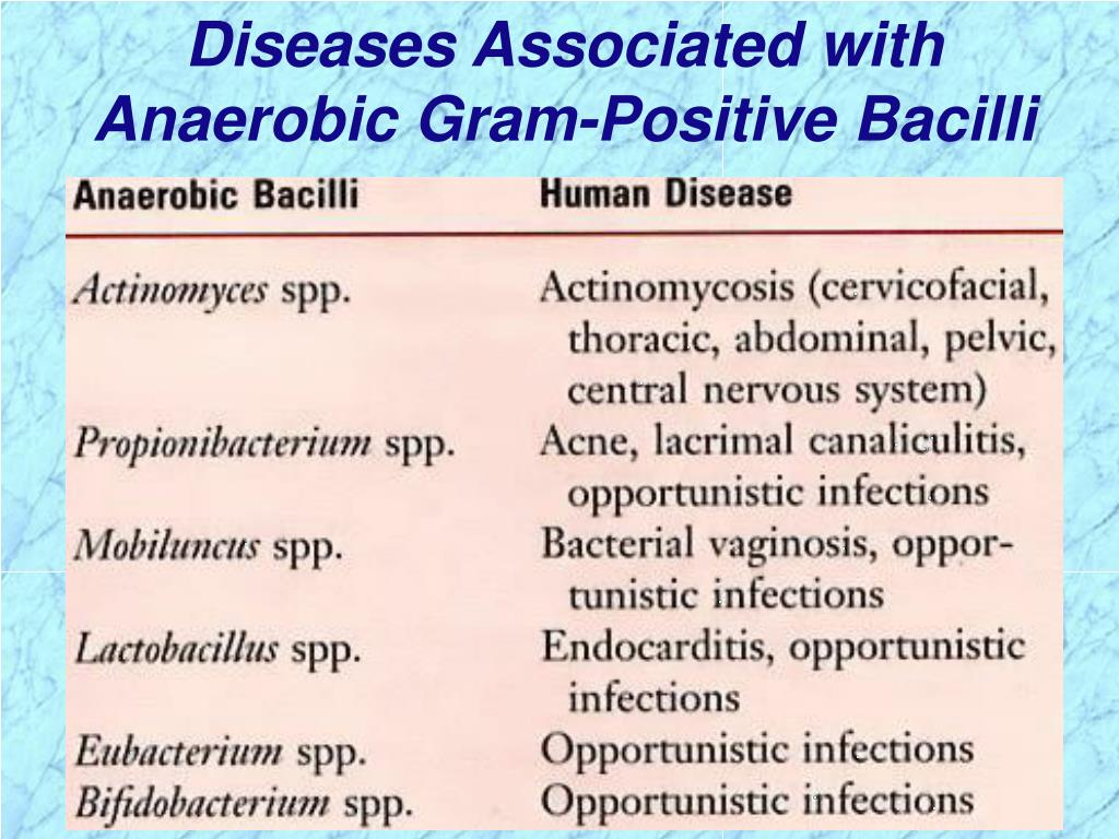 Diseases Associated with Anaerobic Gram-Positive Bacilli
