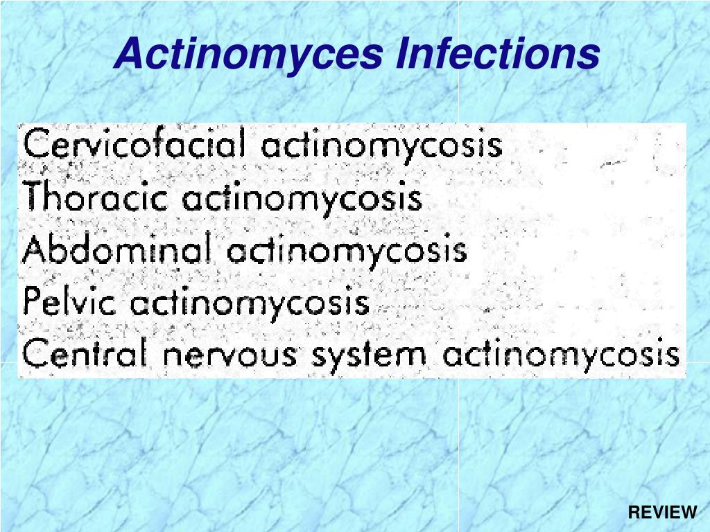 Actinomyces Infections