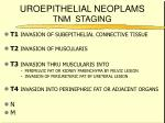 uroepithelial neoplams tnm staging