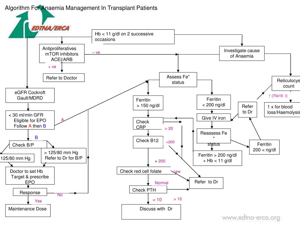 Algorithm For Anaemia Management In Transplant Patients