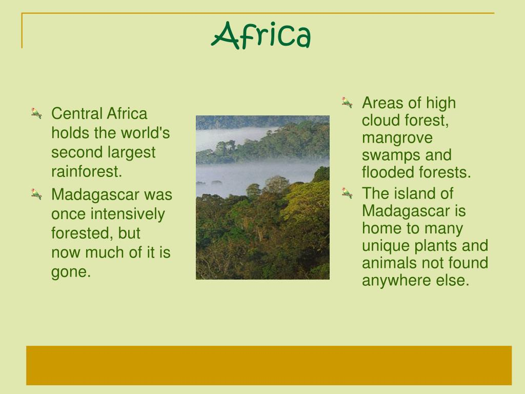 Central Africa holds the world's second largest rainforest.