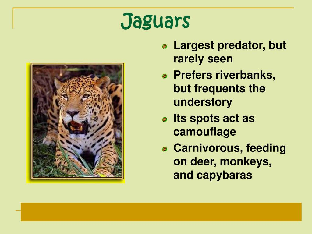 Largest predator, but rarely seen