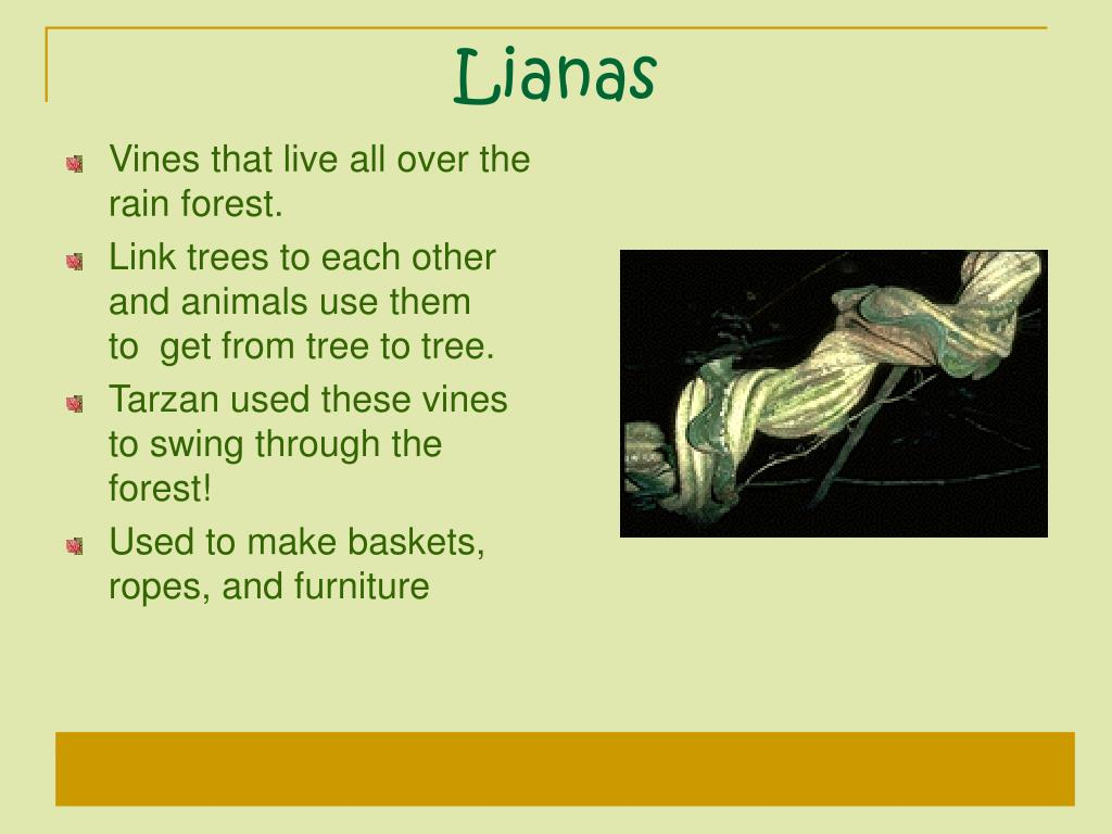 Lianas