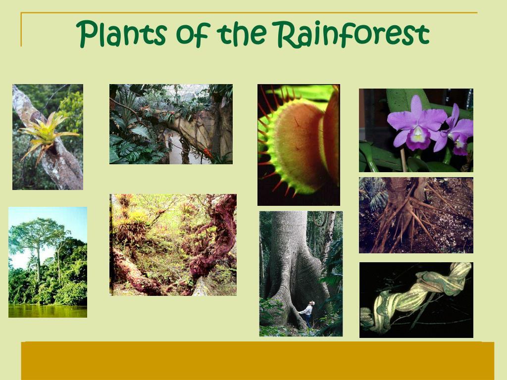 Plants of the Rainforest