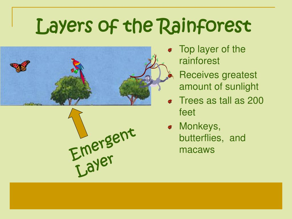 Layers of the Rainforest