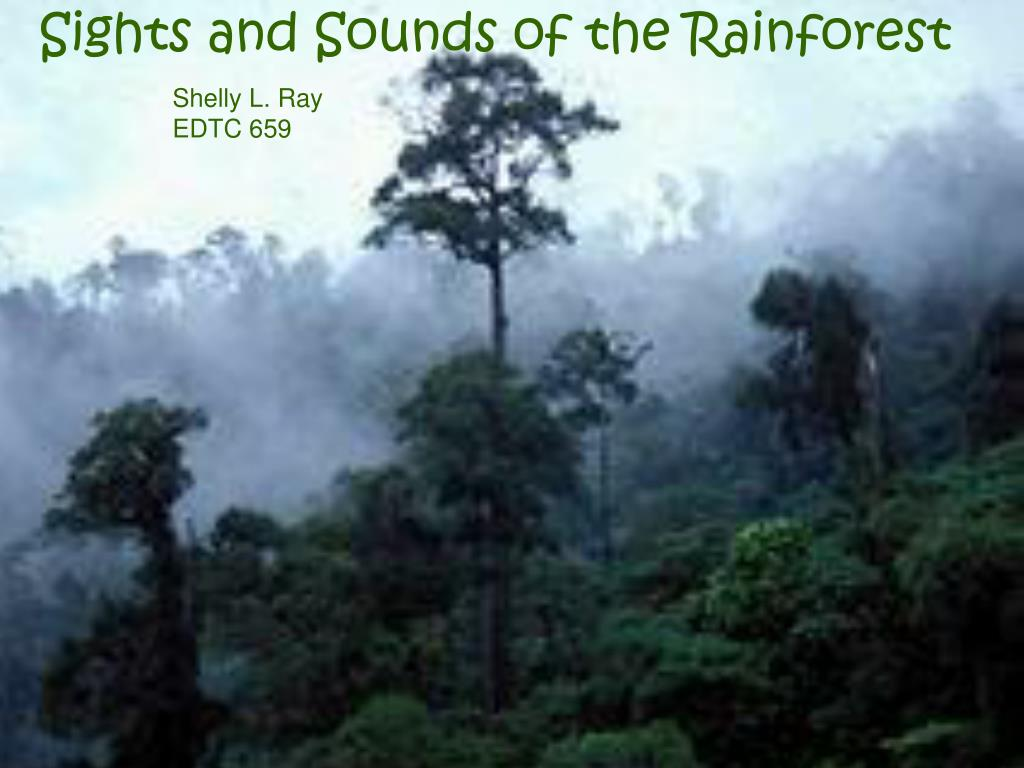 Sights and Sounds of the Rainforest