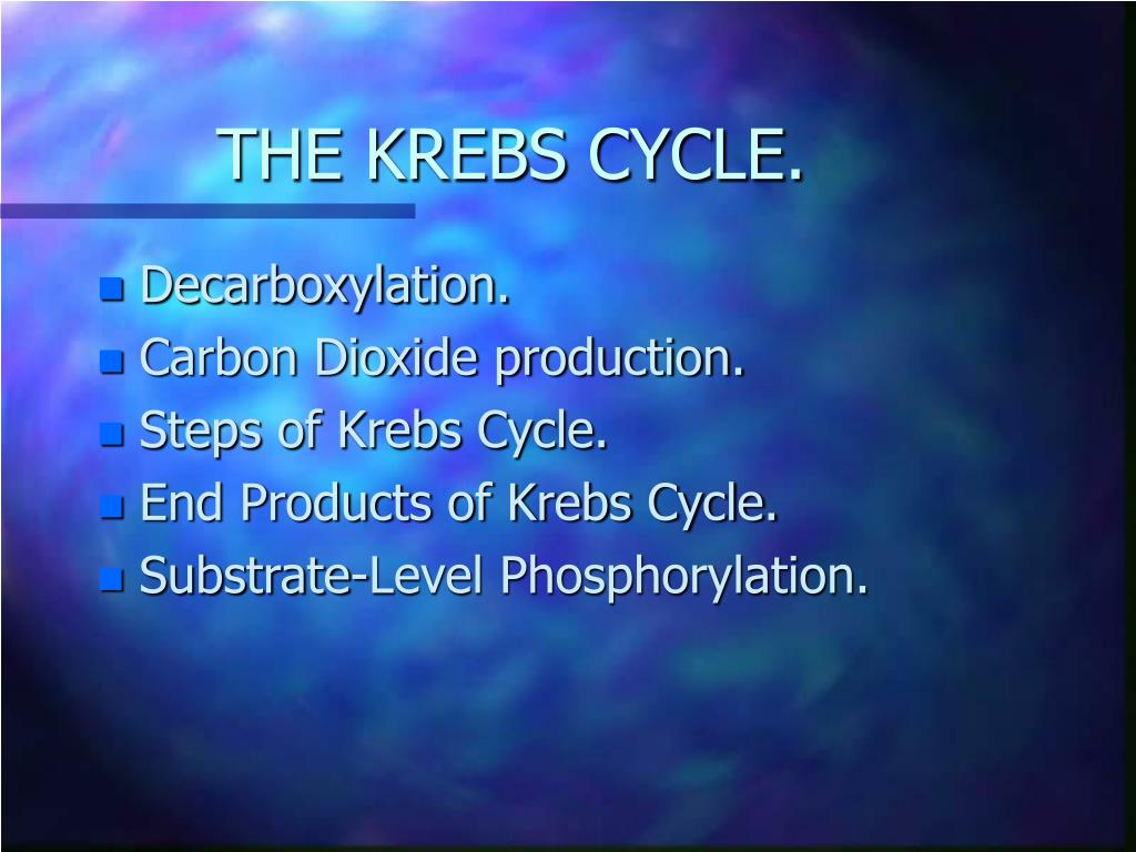 THE KREBS CYCLE.