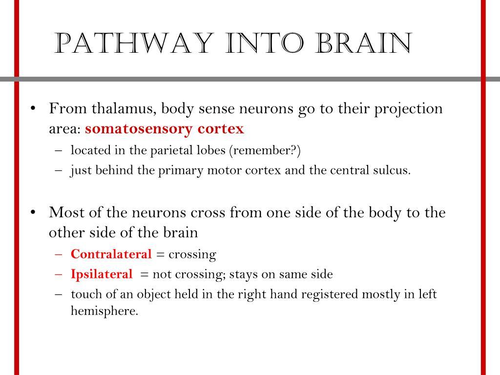 Pathway into brain