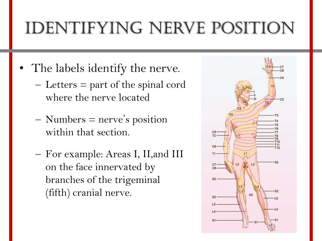 Identifying nerve position