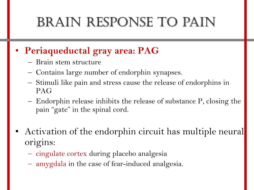 Brain response to pain